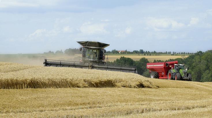Frontansicht des Fendt IDEAL 9T beim Dreschen im Weizenfeld.