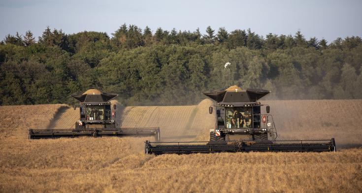 Zwei Fendt IDEAL 9T beim Dreschen im Getreidefeld.