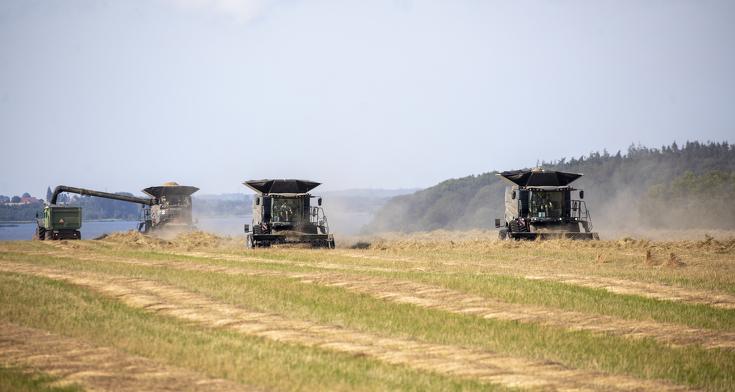 Drei Fendt IDEAL 9T beim Dreschen im Getreidefeld.